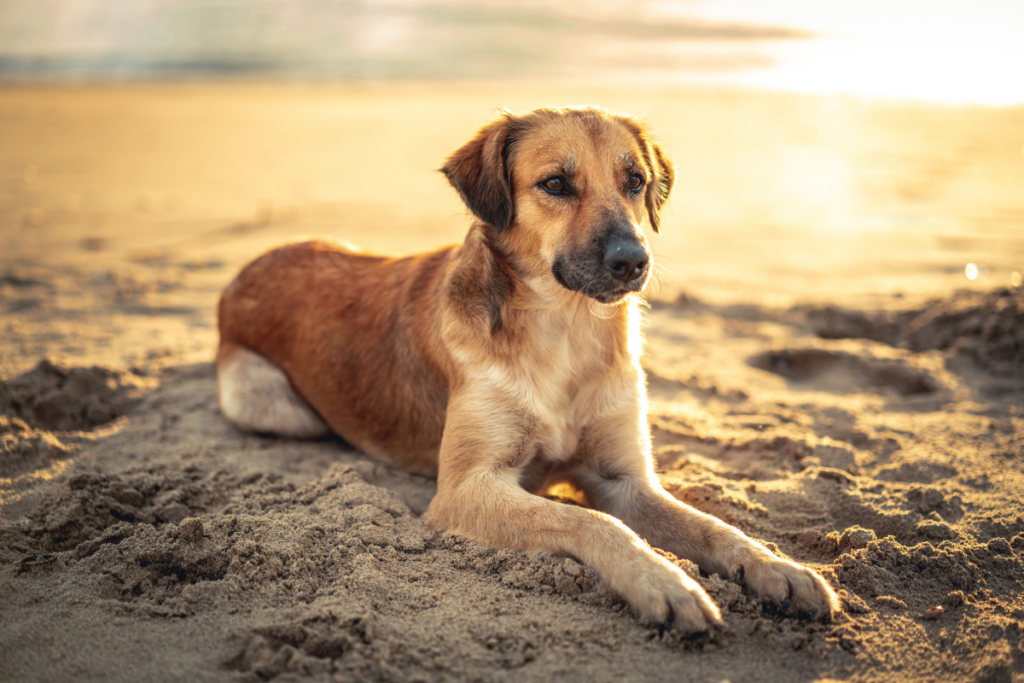 Must Have Pet Features for Your New Custom Home on LBI